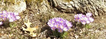 talita virág
