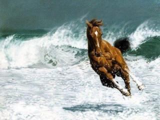 vágtató ló a tengernél