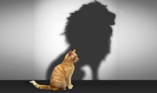 macs,oroszlán