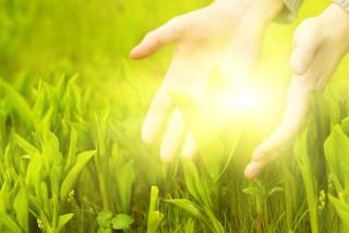 zöldes sárga fűben kéz