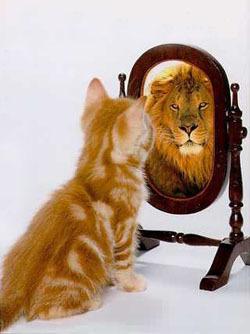 cica-tukor-oroszlan