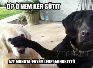 irigy kutya