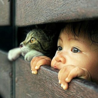 cica,gyerek állat ember
