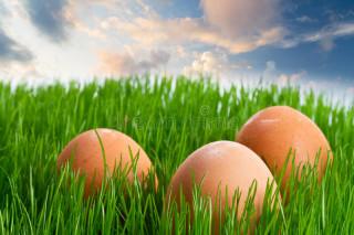 tojás a fűben