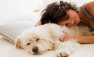 alszik kutyával