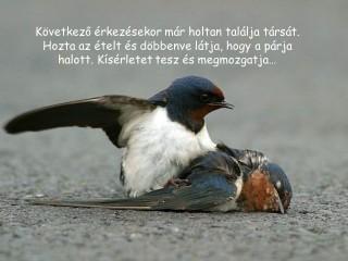 madárgyász