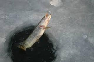 Mint hal a jégen