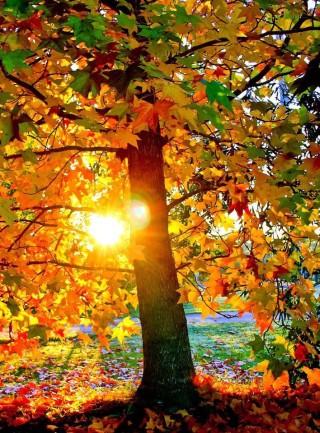 Amikor őszül